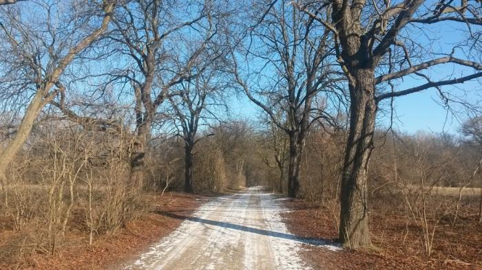 Lobau im Winter