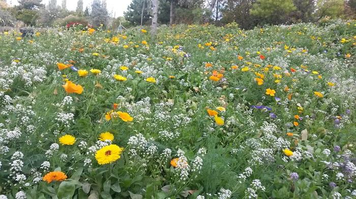 Blumengaerten Hirschstetten - Blumenwiese