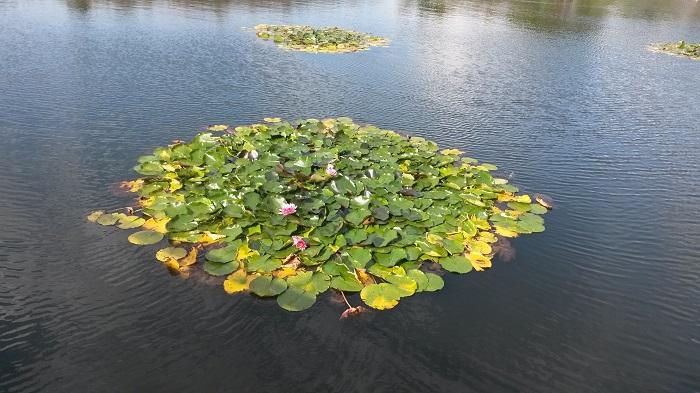 Blumengaerten Hirschstetten - Seerosenteich
