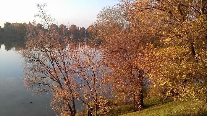 Herbst am Teich Hirschstetten
