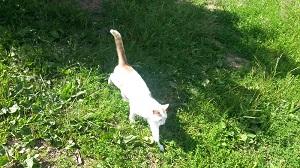 Katze 300 px