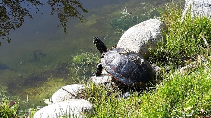 Blumengärten Hirschstetten - Zoo - Schildkröte