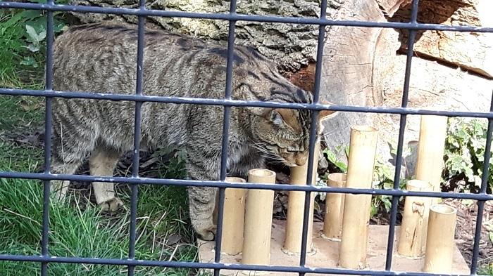 Blumengärten Hirschstetten - Zoo - Wildkatze