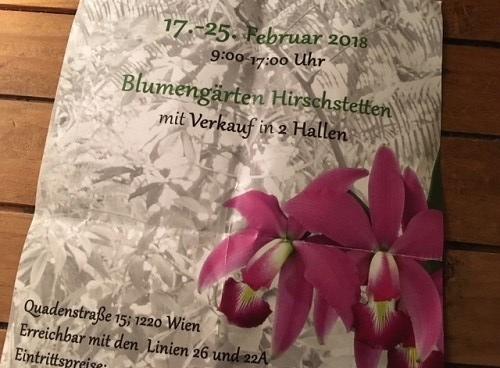 2018-02 Orchideen